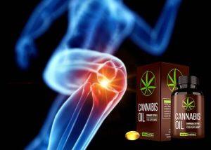 Cannabis Oil – Une huile de graines de chanvre pour la mobilité articulaire et l'hypertension!